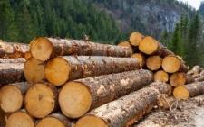 Обсяг експорту буковинських лісоматеріалів скоротився, - Чернівецька митниця
