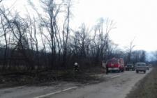 На Буковині раптово перед автомобілем впало дерево, постраждав водій (фото)