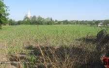 На Буковині фермерські господарства самовільно захопили майже 50 га особливо цінних земель