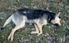 Біля Калинівського ринку знайшли сім мертвих собак, є версія жорстокого вбивства (фото)